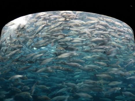 fish-swarm-406569_1280