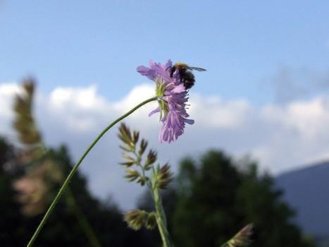 bumblebee-14741_640