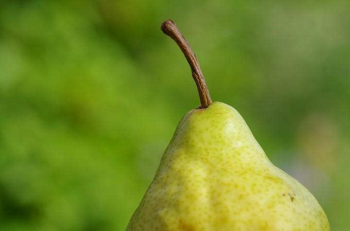 pear-351333_1280