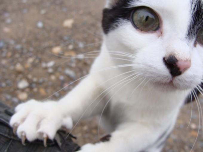 cat-11221_1280