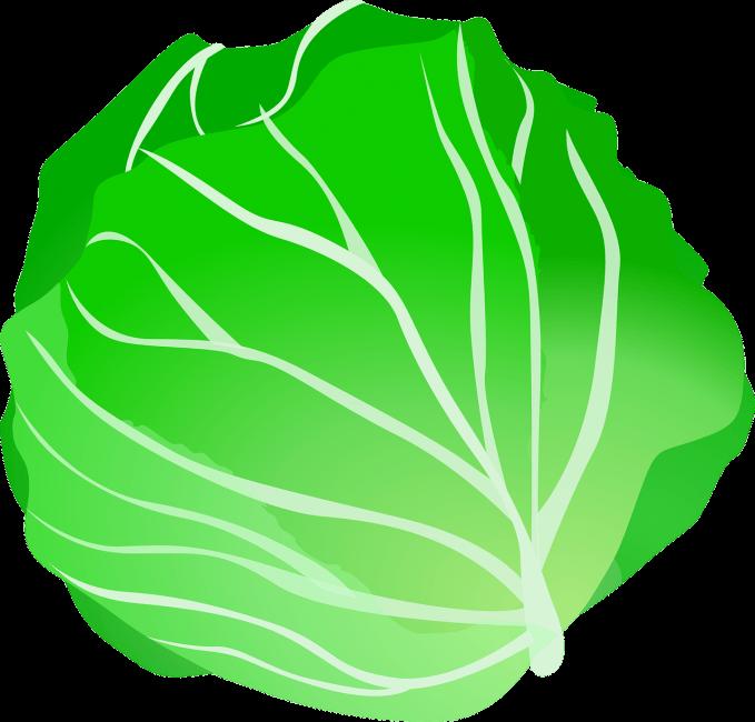 cabbage-159333_1280-679x650 (1)