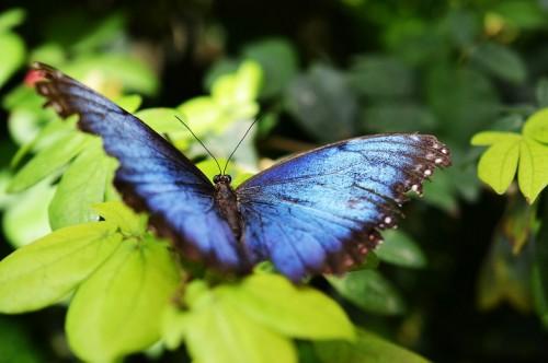 butterfly-517667_1280 (1)