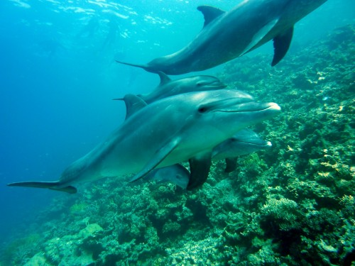 dolphins-378217_1280
