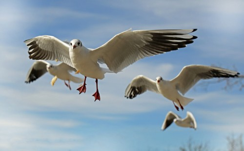 seagull-659344_1280 (1)