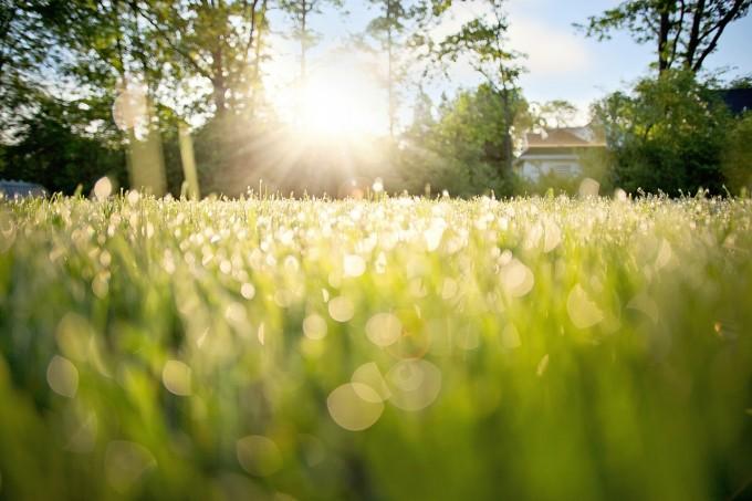 dew-on-grass-788059_1280