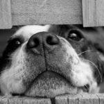 「危ない!!」飛び出してきた犬ひいちゃった!!悲しむ女性にまさかの展開が…