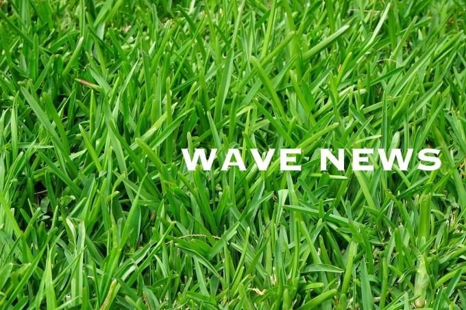 wavenews (18)