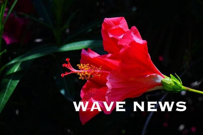 wavenews (4)