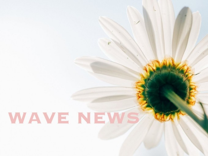 wavenews (9)