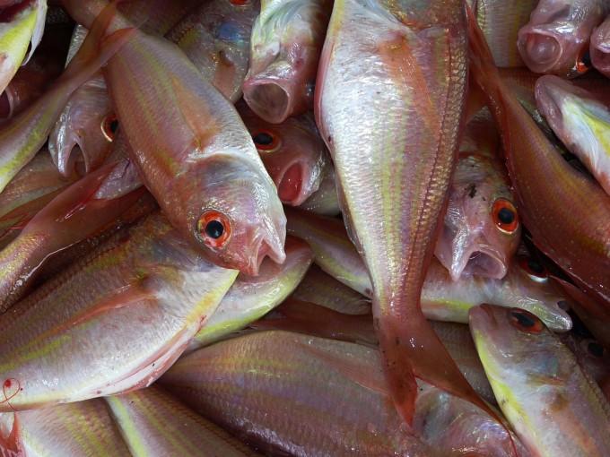 fish-234677_1280