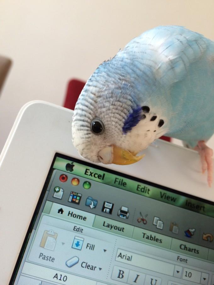parrot-812341_1280