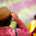 河内藤園2017|今年の藤の花の見頃と開花状況は?GWはチケットの買い方に変更あり!行き方アクセス情報まとめ!