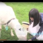 ピース又吉が監督した山梨高原清里PR動画が今話題に!