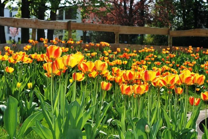 flowers-274222_1280